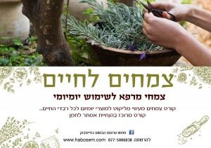 קורס של אסתר לצמחי מרפא