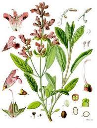 צמחים-כרטיסי